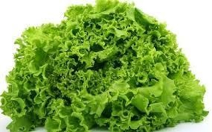 Picture of Chinese Lettuce