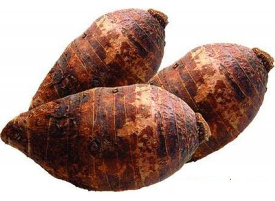 Picture of Large Taro