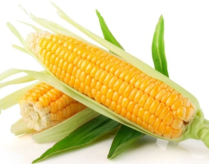 Picture of Sweet Corn