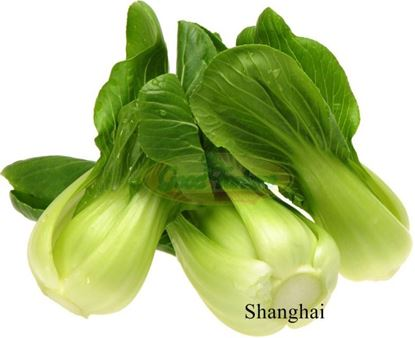 Picture of Shanghai Bok Choy/Package(5)