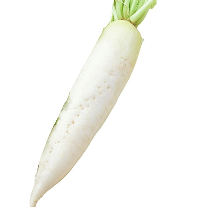 Picture of Daikon